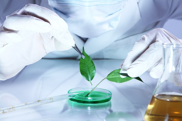 Science experiment with plant leaves in laboratory